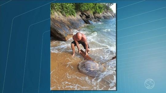 Água viva é vista no mar de Mangaratiba e preocupa banhistas na Costa Verde do Rio