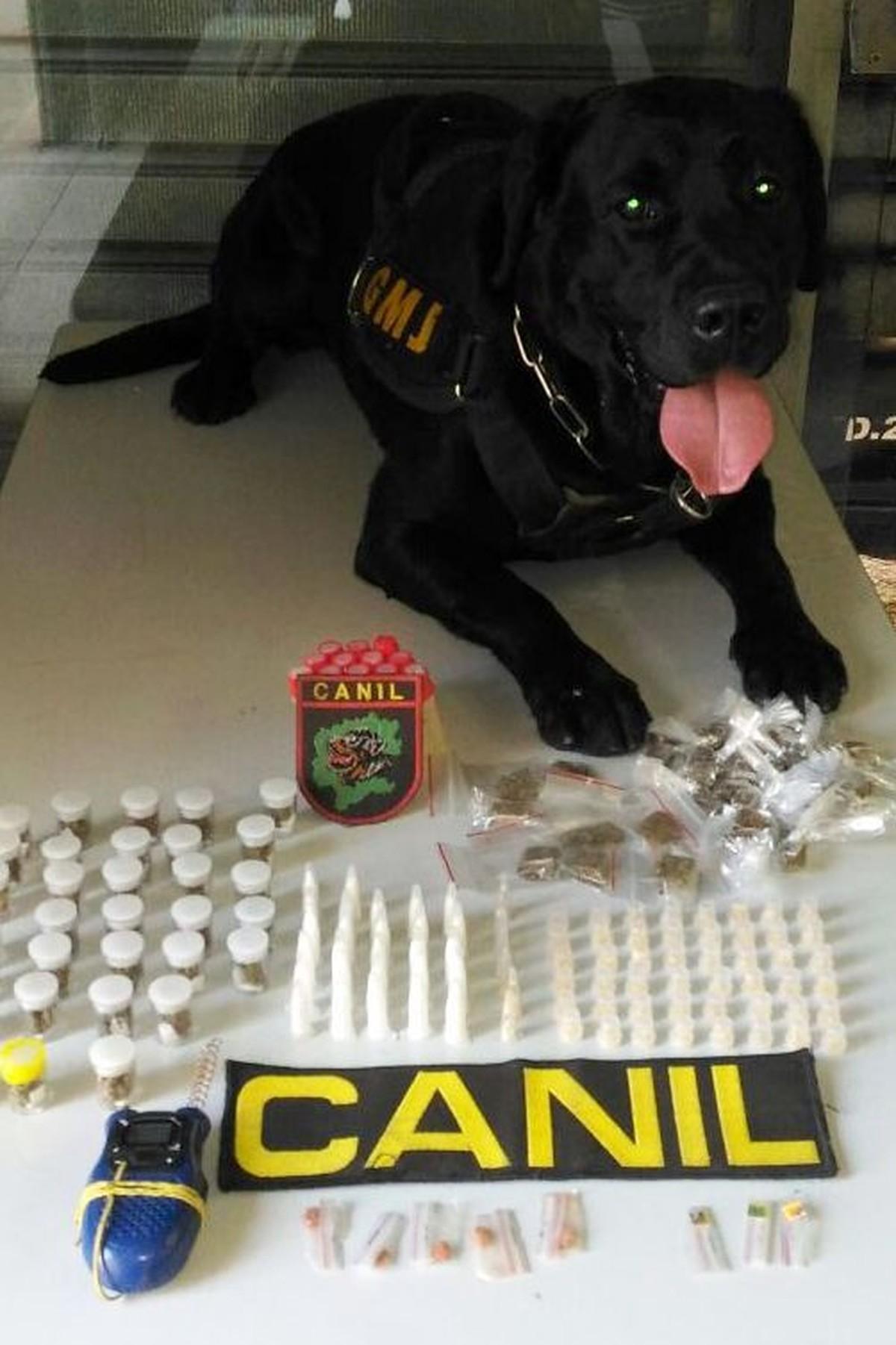 Cão da Guarda de Jundiaí fareja sacola com drogas em matagal