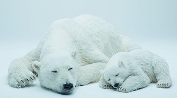 urso-polar (Foto: Divulgação)