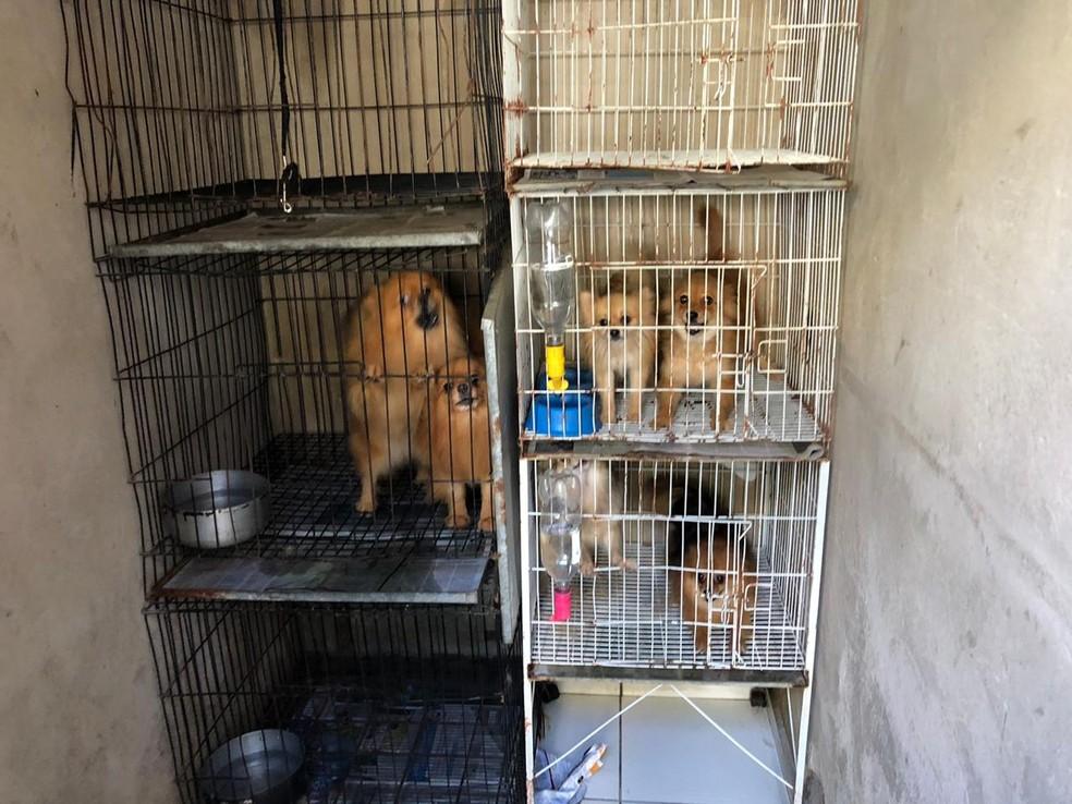 Cães foram encontrados dentro de gaiolas em Rio Preto — Foto: Arquivo Pessoal