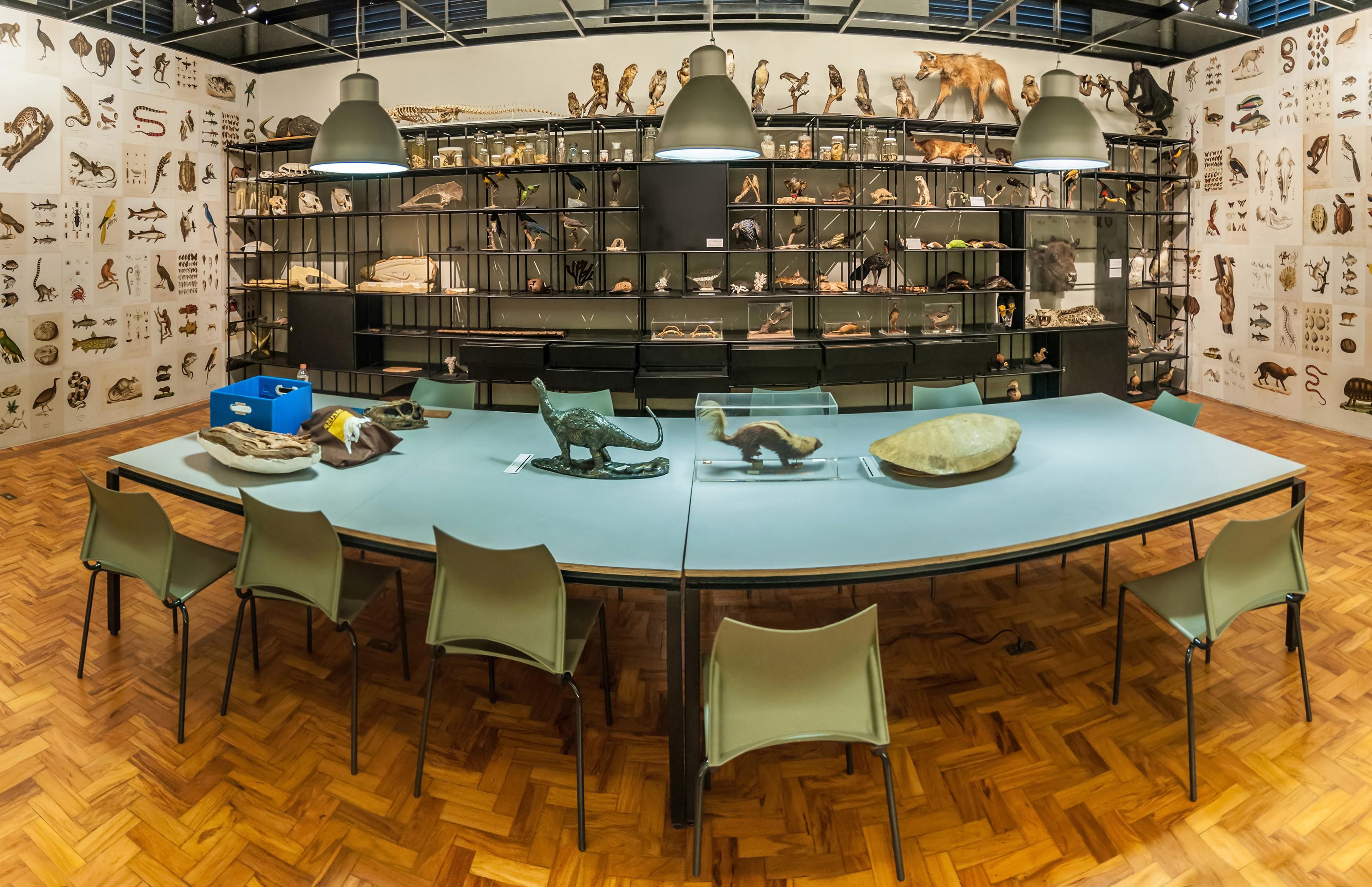 Museu de Zoologia da Universidade de São Paulo (Foto: Reprodução/wikimediacommons)