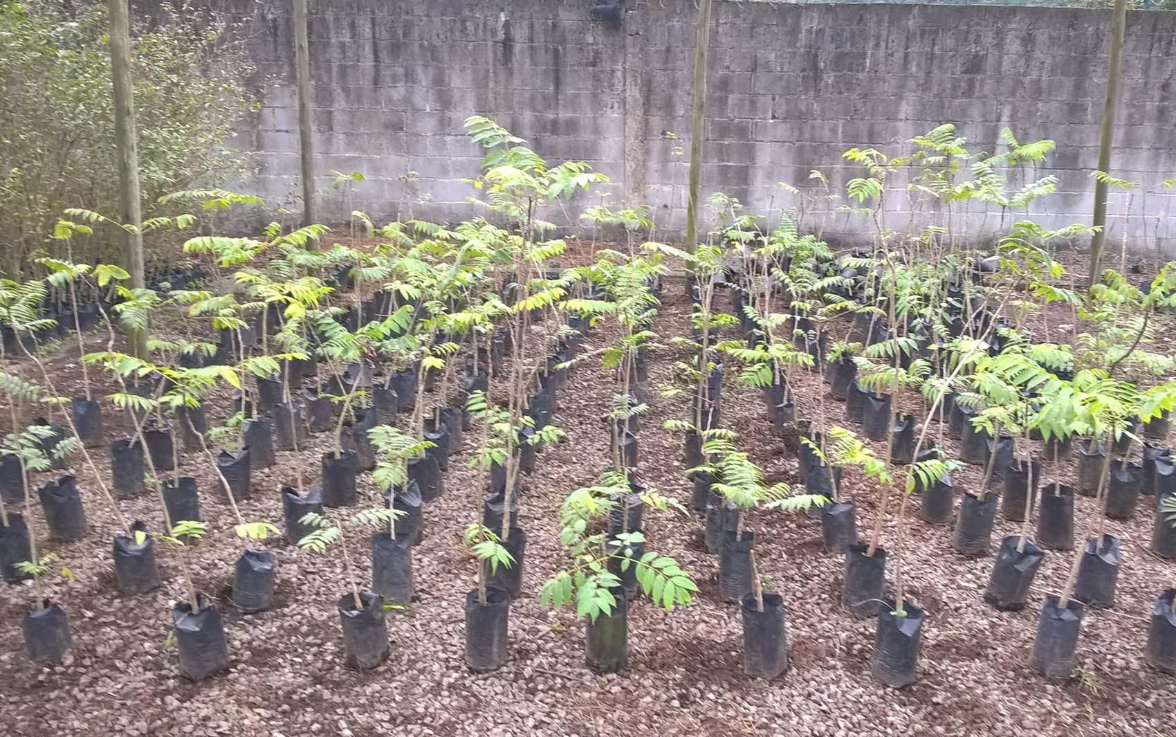 Projeto em Porto Ferreira quer plantar mil árvores em 1 minuto domingo; veja como se inscrever