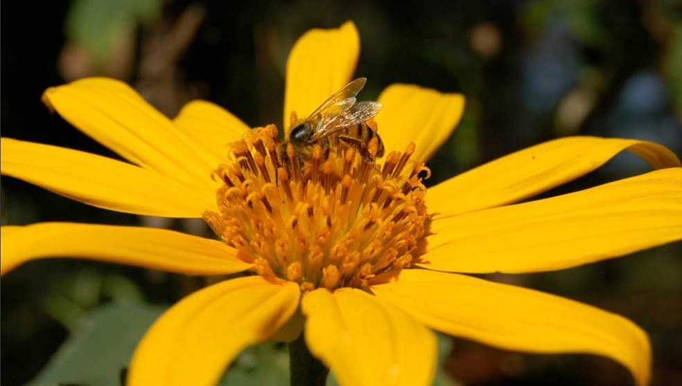 Em Santa Catarina, a apicultura aproveita os terrenos onde não seria possível produzir outras culturas: benefícios ao meio ambiente — Foto: Arquivo TG