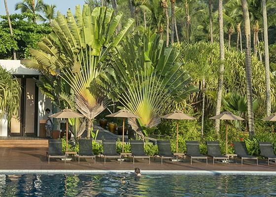 Duas ravenalas no jardim da piscina do hotel Avani Barbarons em Mahé, Seicheles  (Foto:  © Haroldo Castro/ÉPOCA)