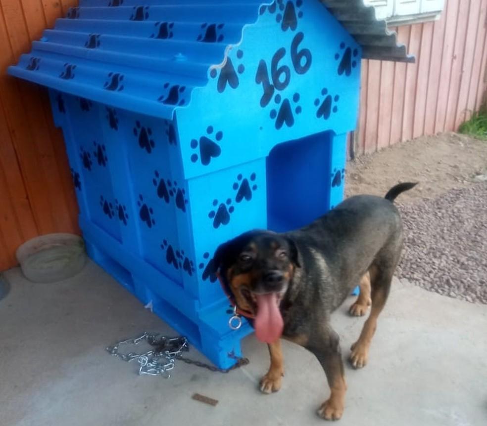 Cachorro foi adotado e recebeu uma casinha — Foto: Cláudia Mara Cavalheiro/arquivo pessoal