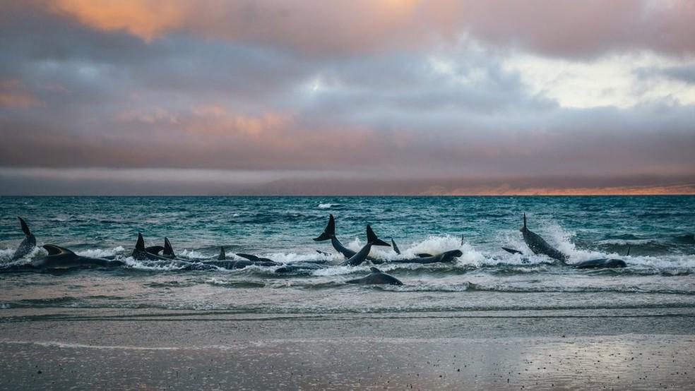 Liz e seu amigo Julian tentaram empurrar algumas baleias de volta para águas mais profundas, mas elas eram muito pesadas e não saiam do lugar — Foto: Liz Carlson/BBC