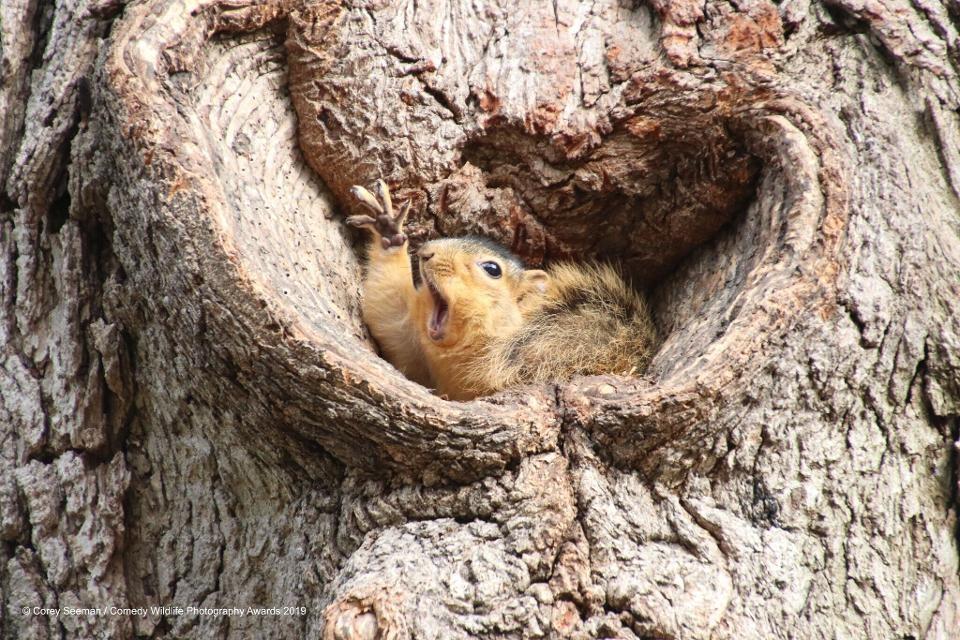 Who wants peanuts? (Photo: Reproduction Comedy Wildlife Photography Awards 2019)