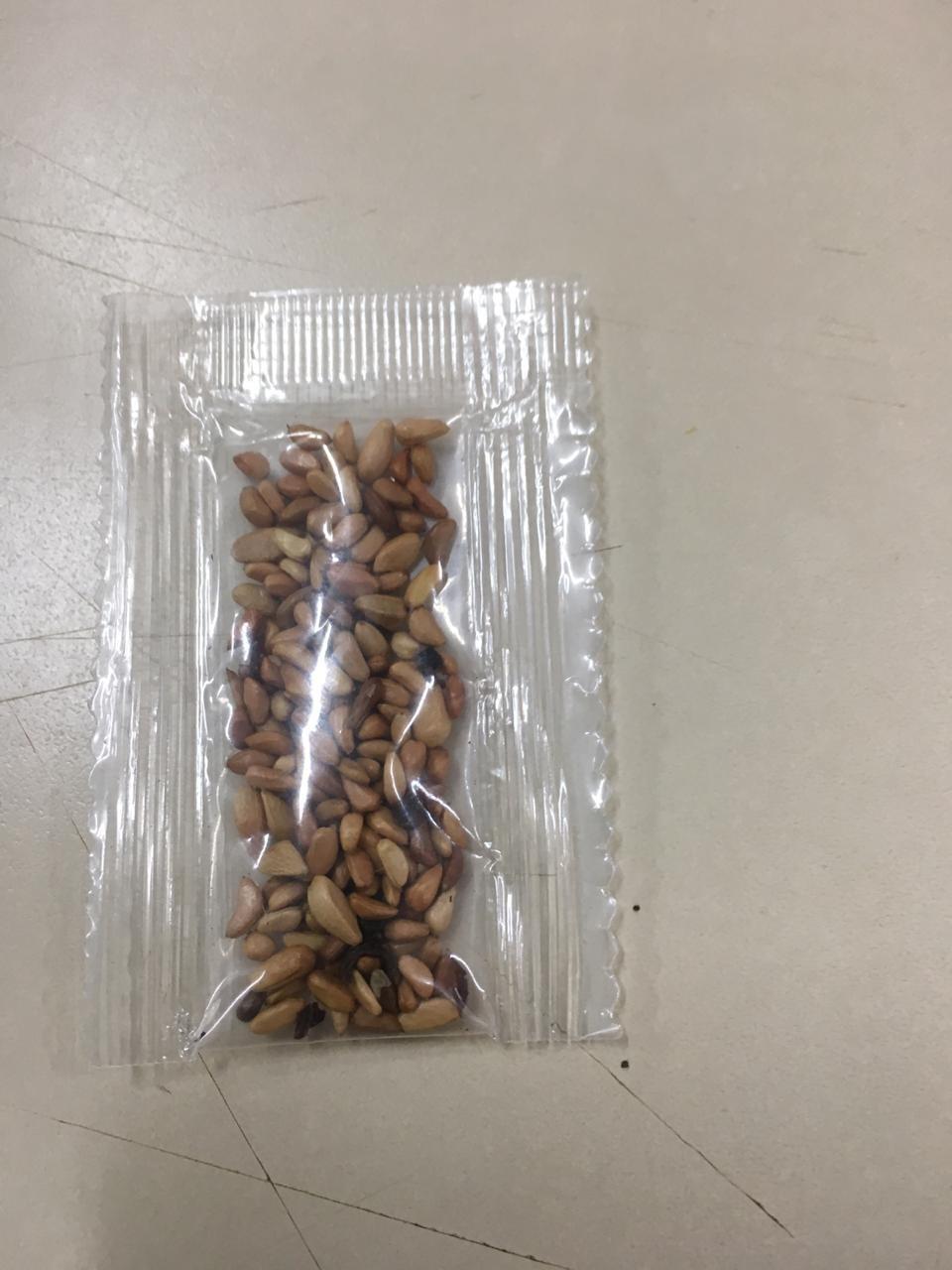 Morador de MS recebe pacote de sementes da China por correio e governo emite alerta para riscos