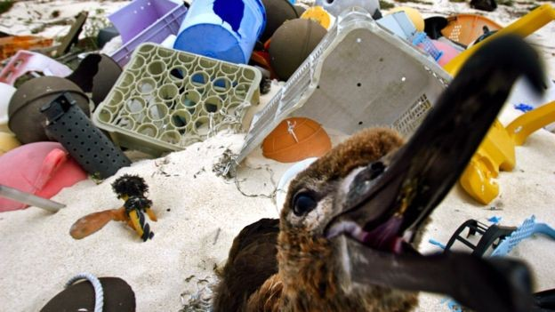 A ingestão de plástico tem provocado a morte de diversos tipos de animais, desde tartarugas até aves (Foto: Getty Images via BBC News Brasil)