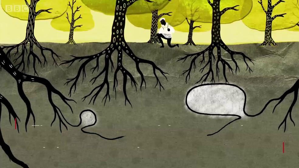Árvores secretamente 'falam, negociam e brigam' entre si (Foto: BBC)
