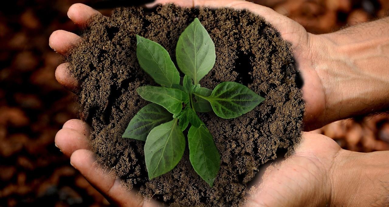 Conheça 5 Atitudes Simples Para Preservar O Meio Ambiente