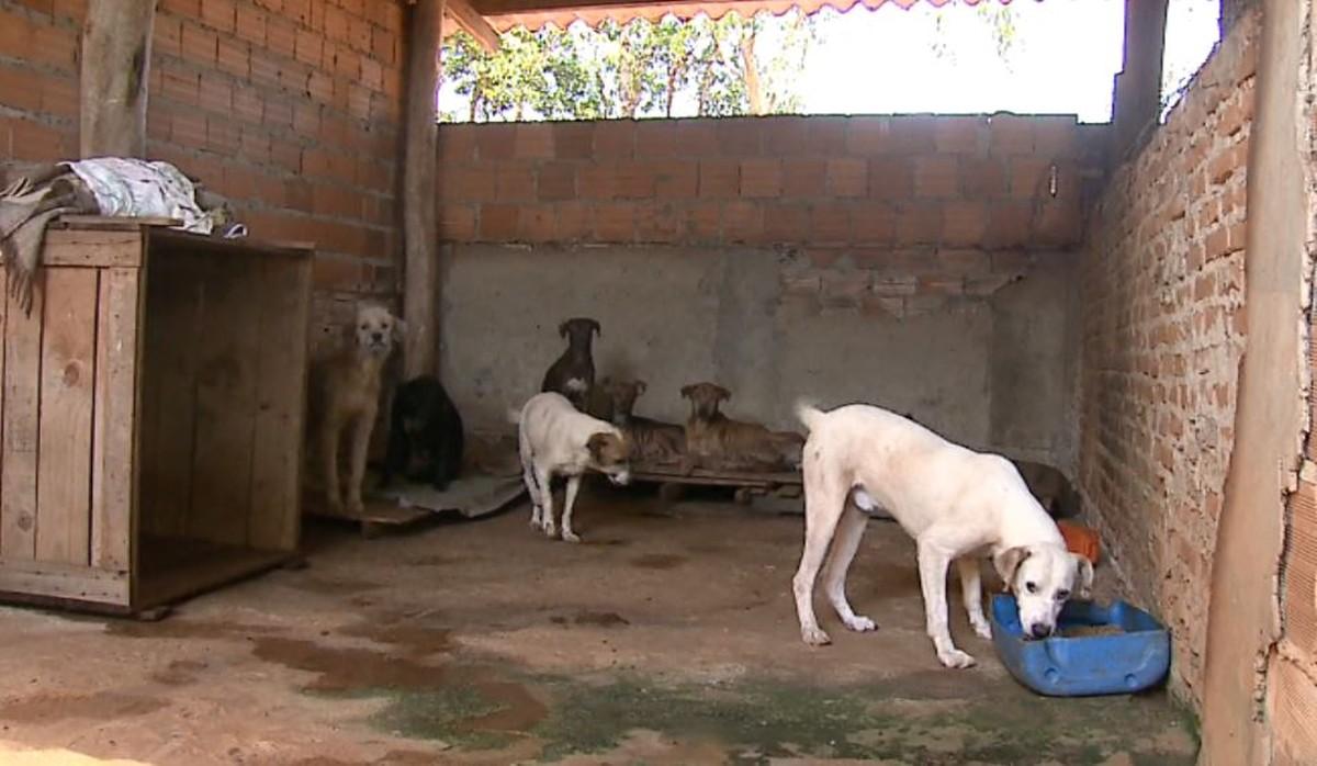 Com aluguel de canil atrasado, 163 animais podem ser despejados em Américo