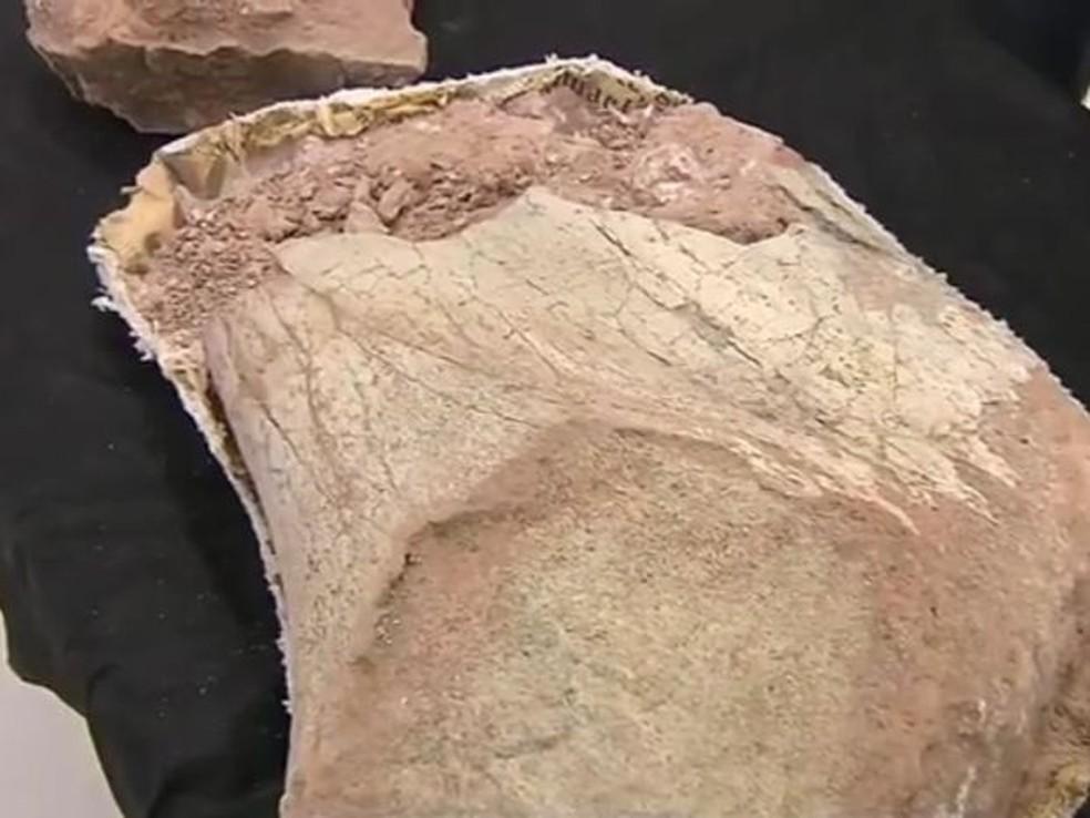 Escavação indica indícios de vida há 65 milhões de anos na região de Marília — Foto: TV TEM/Reprodução