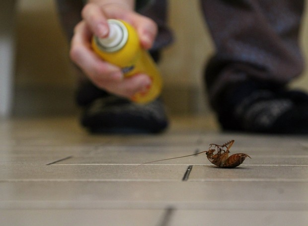 Dicas para se livrar das baratas (Foto: GettyImages)