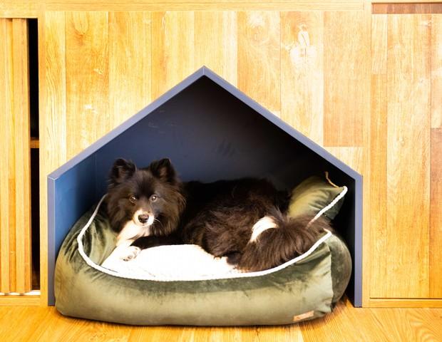 Laila, cachorra de Paula e Breno tem um espaço no apê só para ela (Foto: Rafael Cusato/Quem)