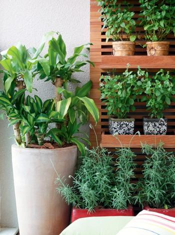 3. Orgânicos em casa (Foto: Pedro Abude/Editora Globo)