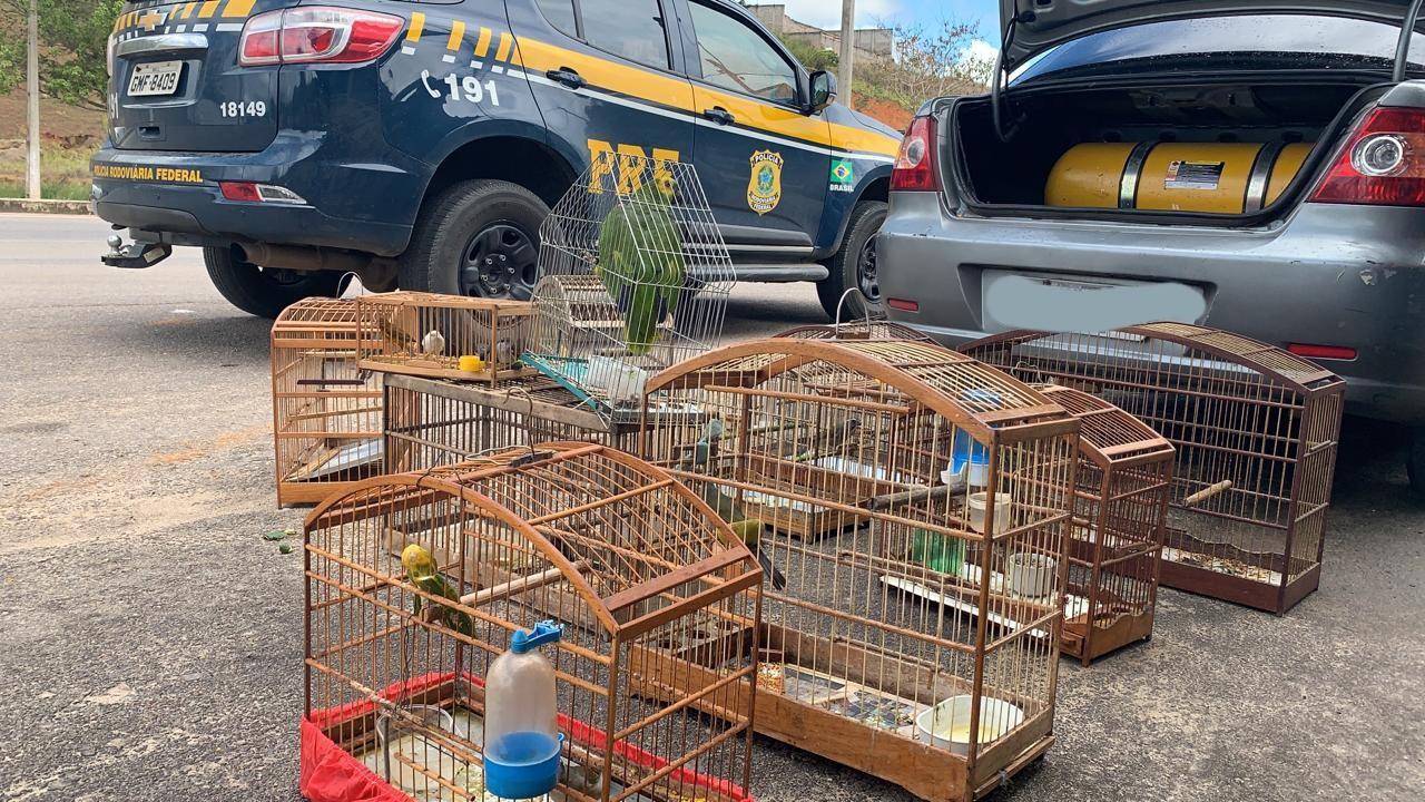 Casal é preso por comércio ilegal de pássaros silvestres na BR-116 em Miradouro