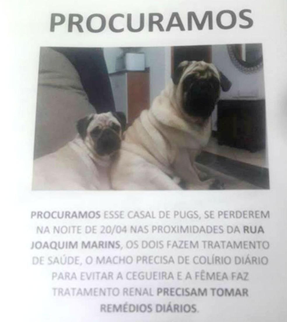 Cartazes foram espalhados pela cidade na tentativa de achar o casal de pugs (Foto: Arquivo pessoal)