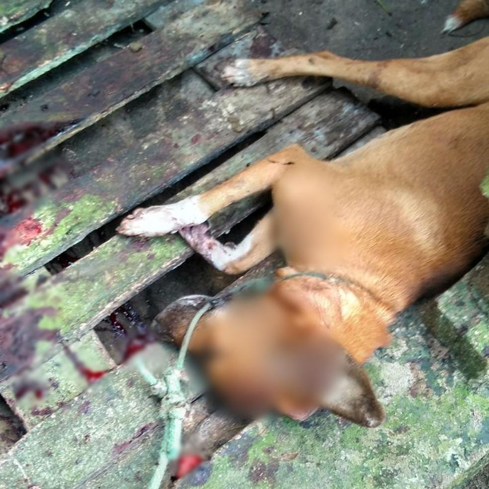 Cachorro teve crânio aberto pelo homem de 31 anos, de acordo com a polícia (Foto: Divulgação/Polícia Civil)