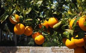 6 frutas para plantar no quintal de casa