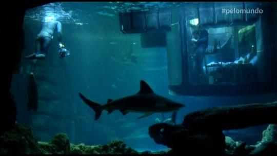 Pelo Mundo: Quarto submerso é cercado por tubarões, em Paris