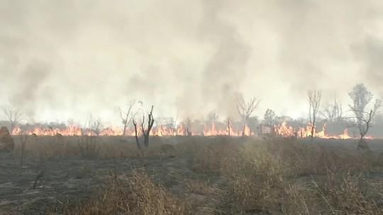 Queimada atinge área de reserva ambiental em Castilho/SP