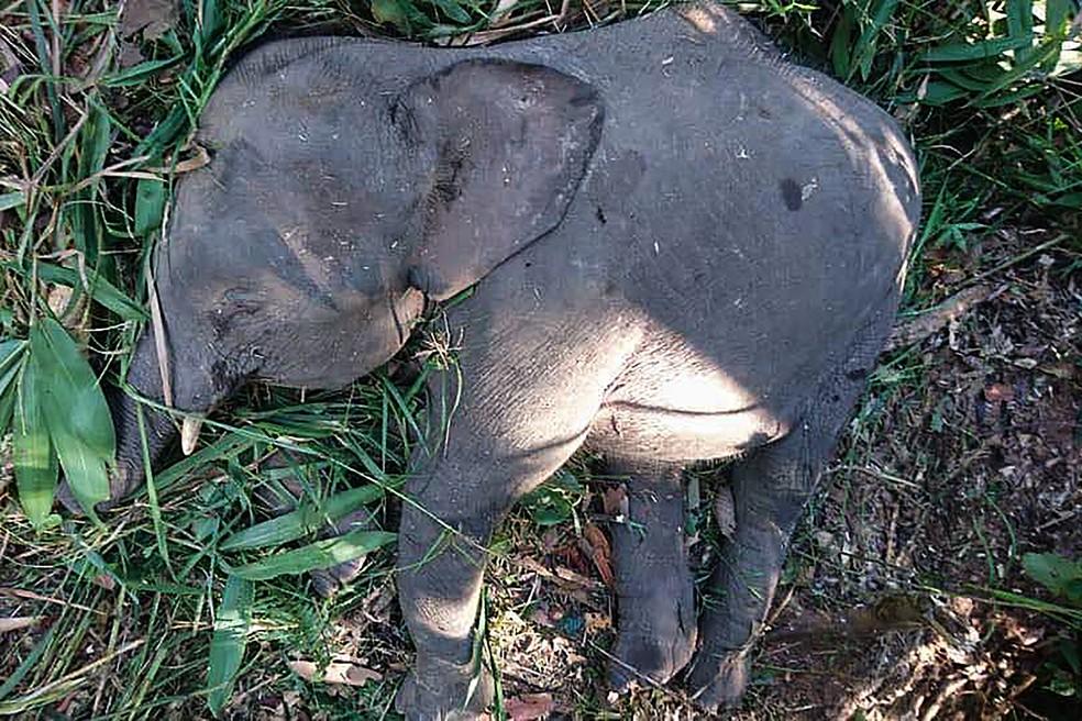 Elefante foi morto por moradores em ilha da Malásia (Foto: Sabah Wildlife Department / AFP)