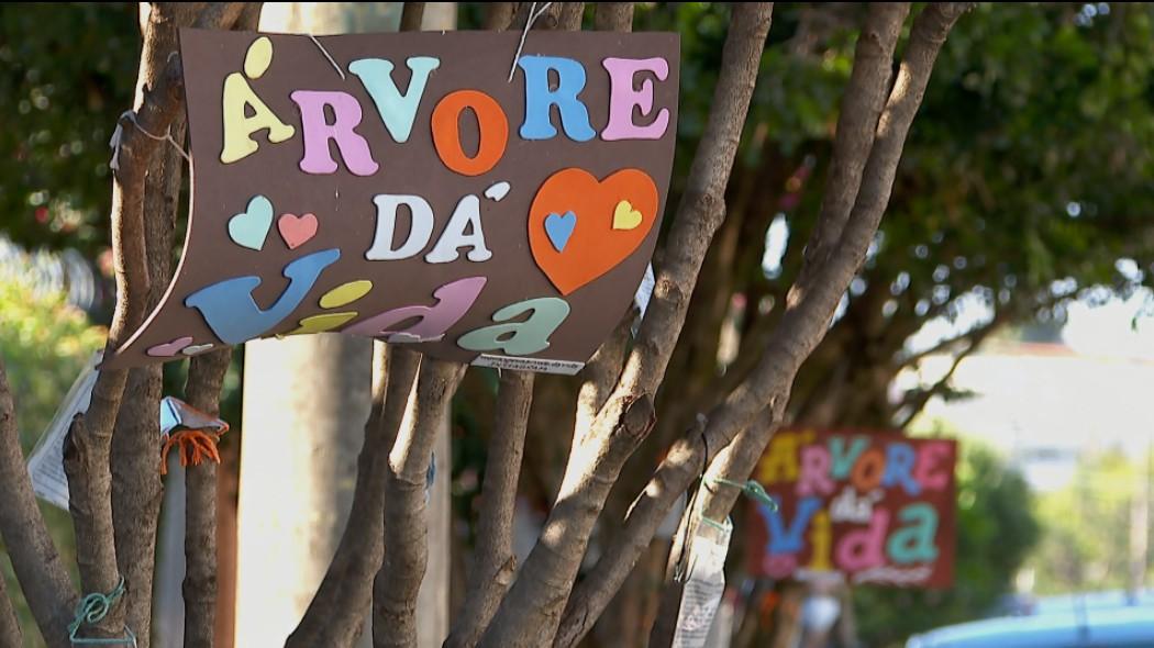 'Semente do bem', diz mulher que espalha mensagens de esperança em árvores de Batatais, SP