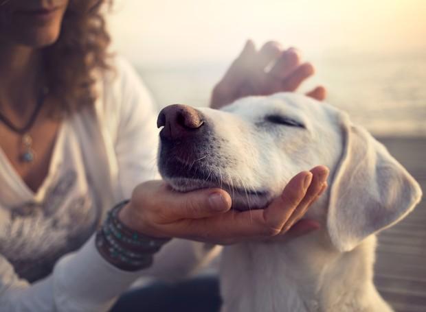 Cachorro (Foto: Thinkstock)