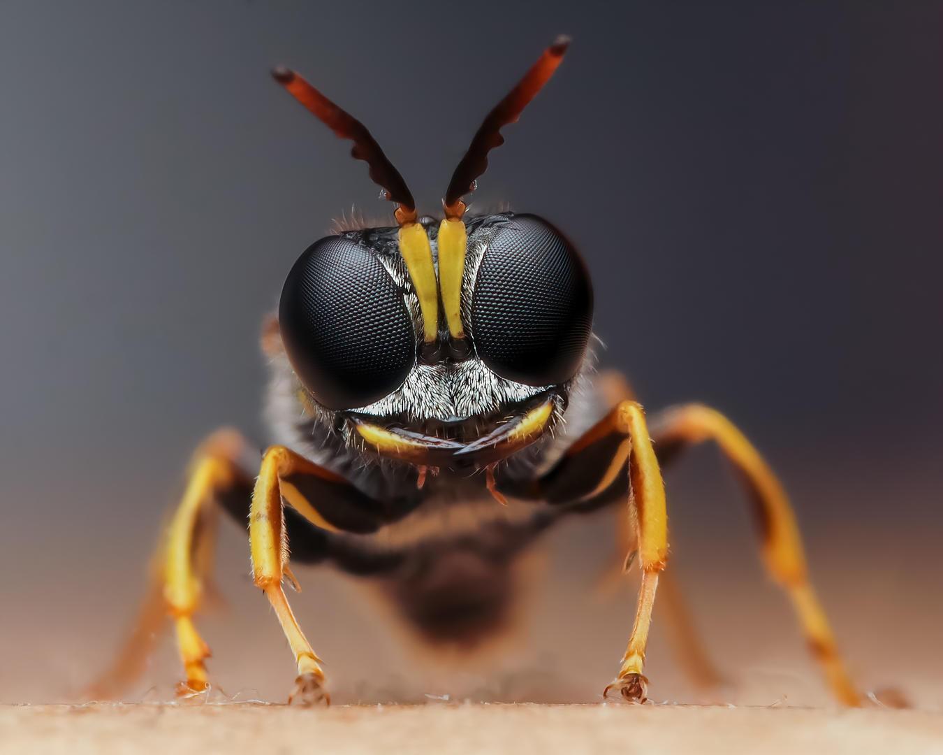 Concurso premia melhores fotos de insetos ao redor do mundo (Foto: Rory J Lewis)