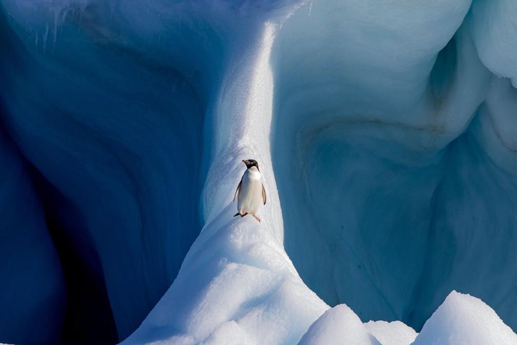Mundo natural: imagem de um pinguim na Antártica foi a vencedora na categoria — Foto: Conor Ryan via Smithsonian Mag