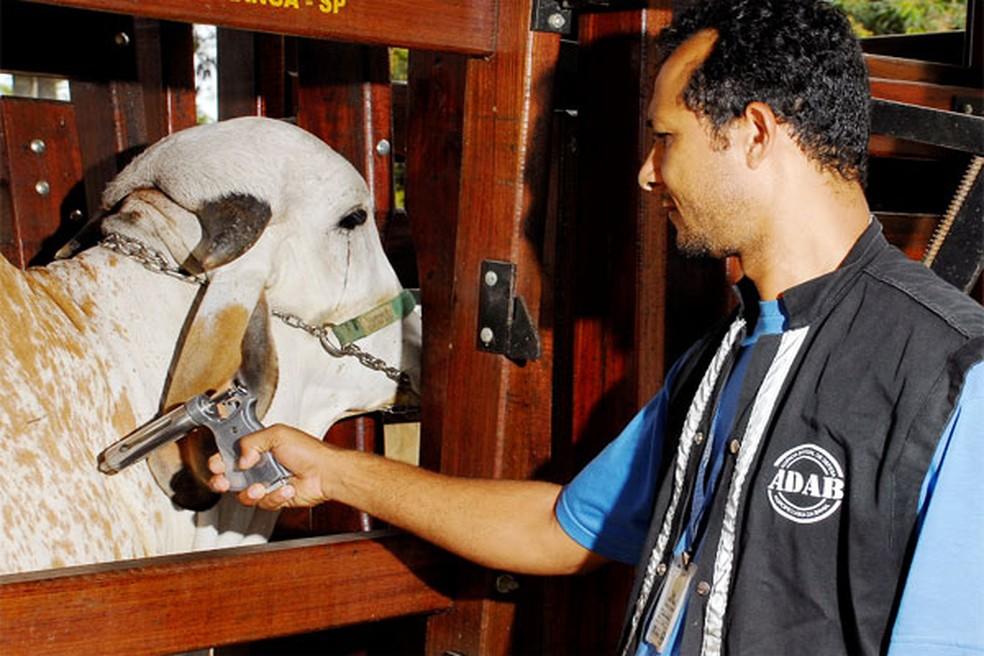 Segundo a Adab, 10 milhões de animais devem ser vacinados na Bahia (Foto: Adab/ Divulgação)