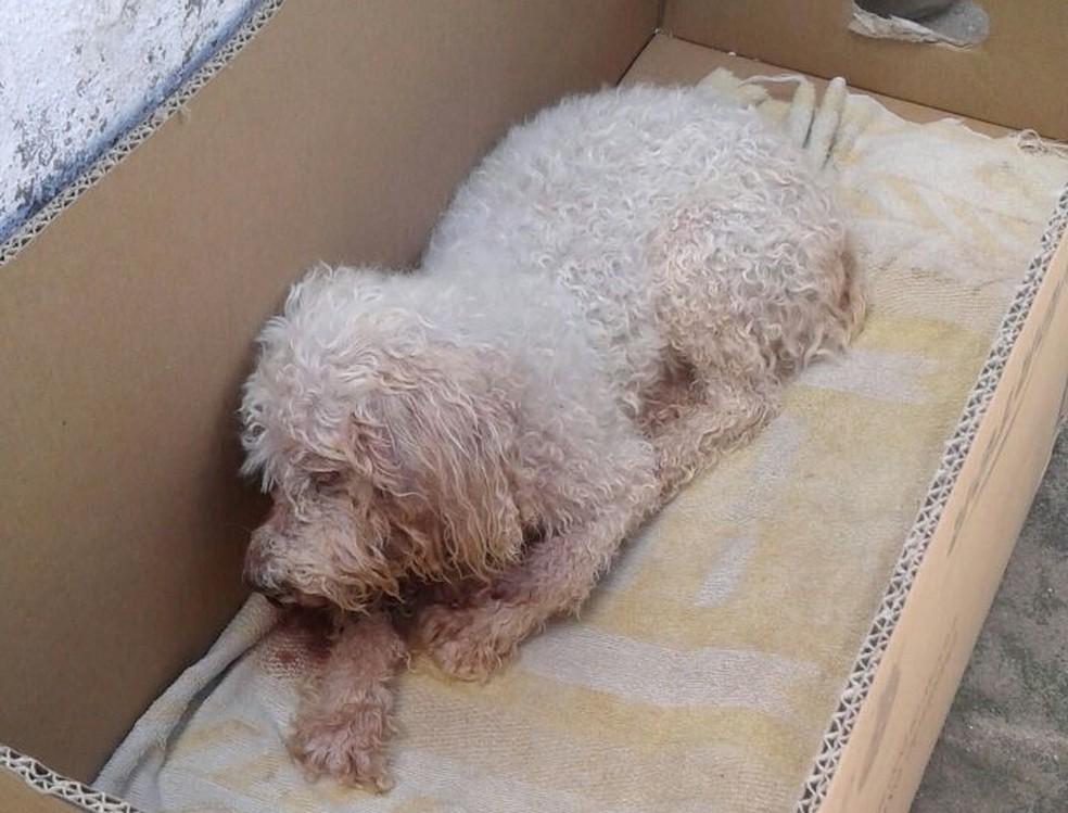 Cachorro estava com ferida na boca e apresentava quadro infeccioso, segundo veterinário (Foto: Danúbia Andrade/Arquivo pessoal)