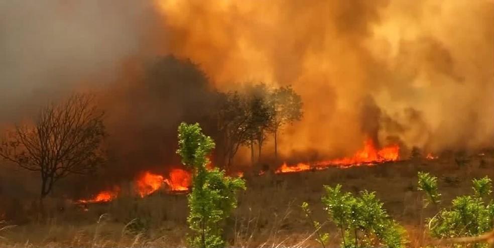 Ceará tem mais de mil focos de incêndio até outubro, e animais silvestres sofem escassez de alimento e água — Foto: TV Verdes Mares/Reprodução