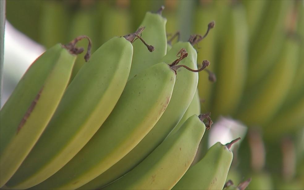 Banana nanica custa R$ 1,80 em Guajará-Mirim e R$ 1,20 em Jaru segundo cotação da Emater (Foto: Reprodução/ TV TEM)