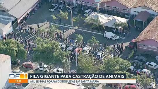 Fila gigante em Santa Maria para castração de animais