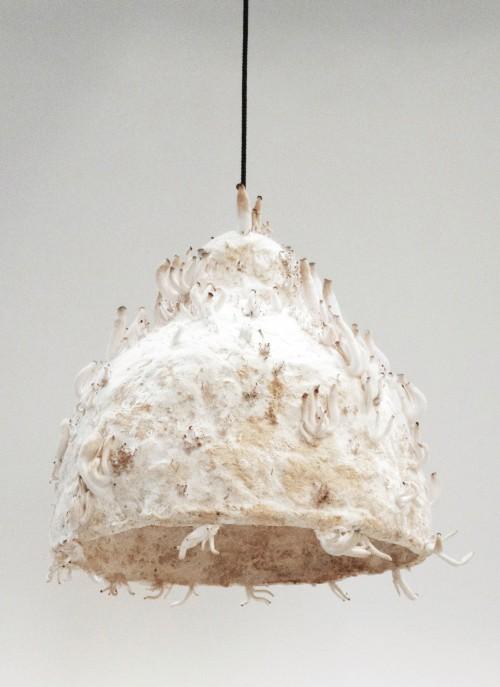 Textura. O cogumelo funciona como uma espécie de cola natural entre as fibras de tecido (Foto: Jonas Edvard / Divulgação)