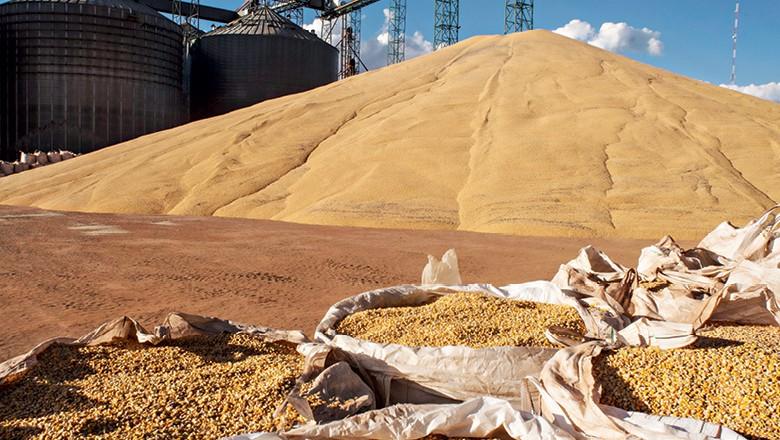 Silagem de milho em sacos (Foto:  José Medeiros/Editora Globo )
