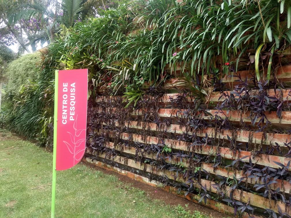 Centro de Pesquisa do Jardim Botânico da Universidade Federal de Juiz de Fora (UFJF) — Foto: Roberta Oliveira/G1