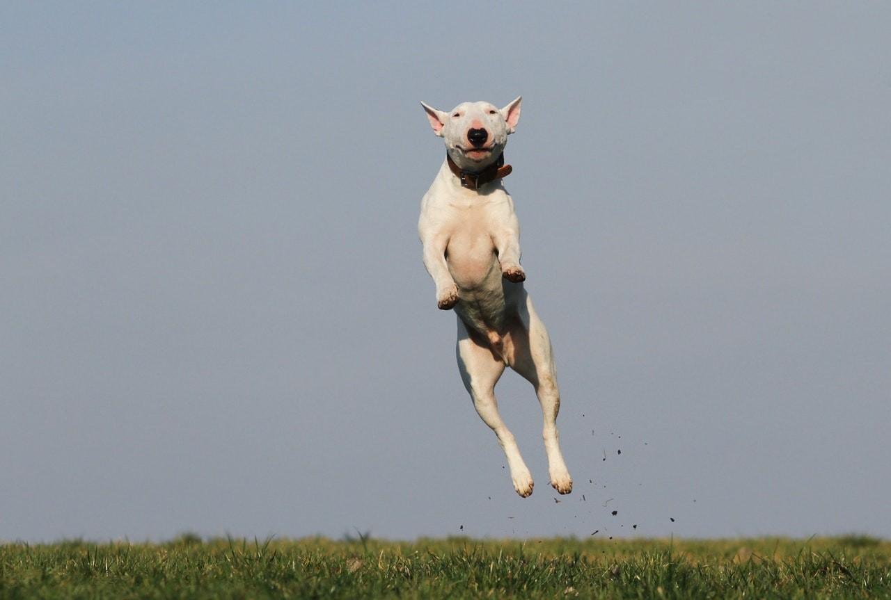 cachorro; cão; felicidade; alegria (Foto: Pexels)