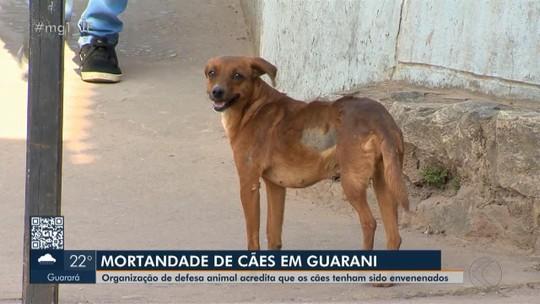 Cães e gatos estão aparecendo mortos em Guarani; suspeita é de envenenamento