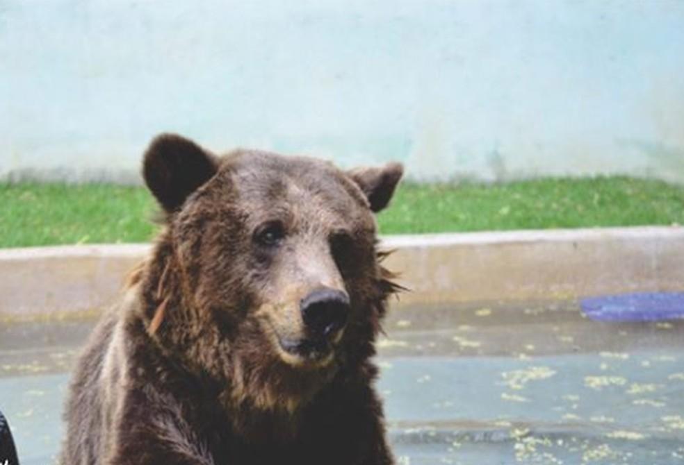 Semace emite parecer sobre situação de zoológico de Canindé que abriga ursos — Foto: Santuário de Canindé/ Divulgação