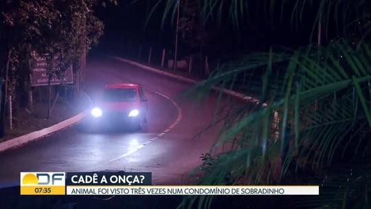 Onça parda foi vista três vezes em condomínio de Sobradinho