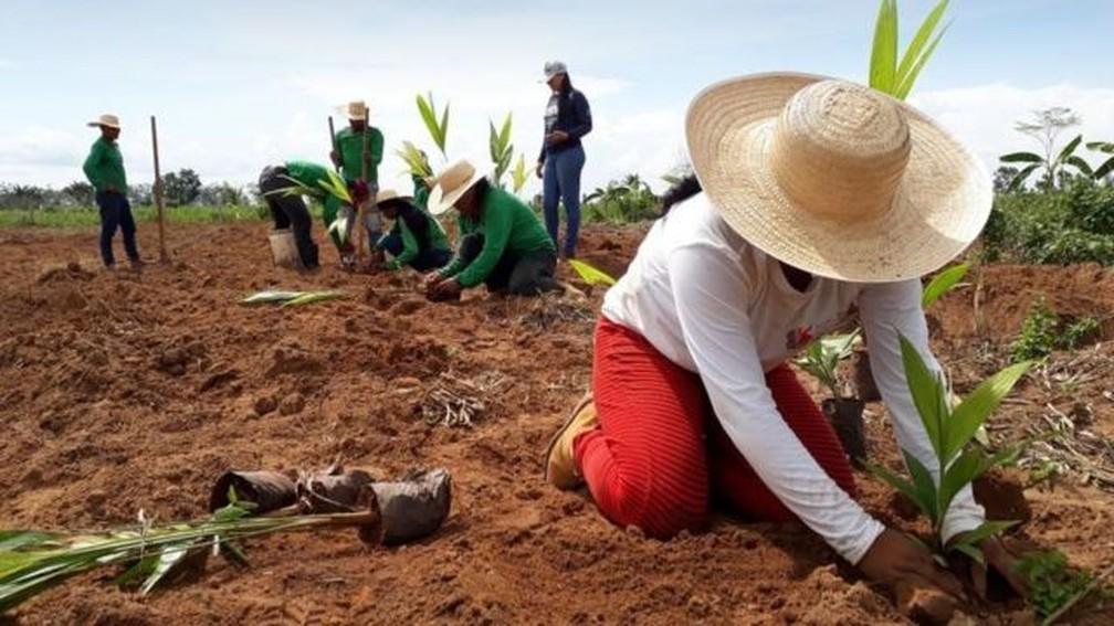 O plantio de mudas também é uma das técnicas usadas para a restauração de paisagens florestais — Foto: Ecoporé-RO/Divulgação