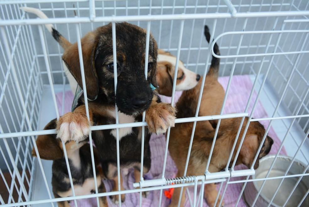 Feira de Adoção de Animais será realizada neste fim de semana em Teresópolis, no RJ | Região Serrana | G1