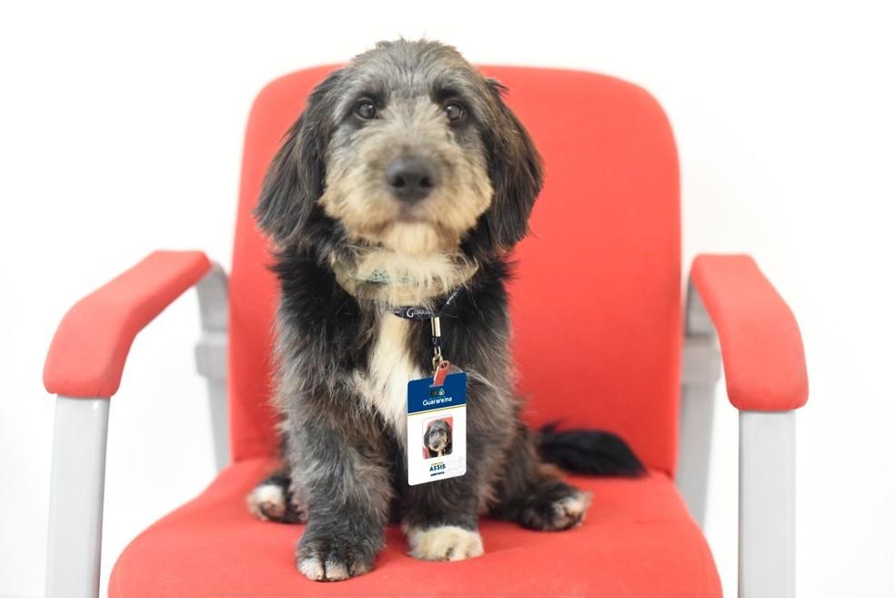 Cãozinho Assis é o novo 'funcionário' do CAPS de Guararema e ganhou até crachá — Foto: Vitoria Mikaelli/Prefeitura de Guararema