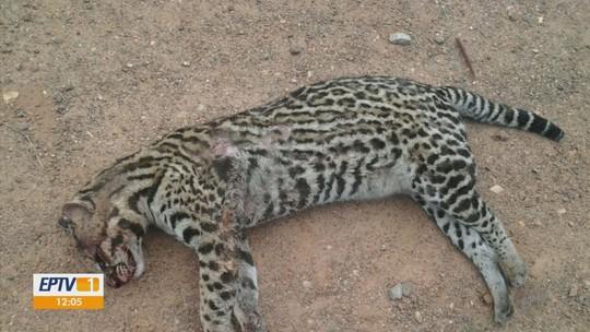 Atropelamentos de animais silvestres próximo a parque estadual preocupam autoridades