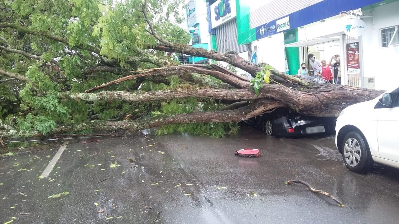 Árvore cai sobre carro durante temporal em Itapetininga