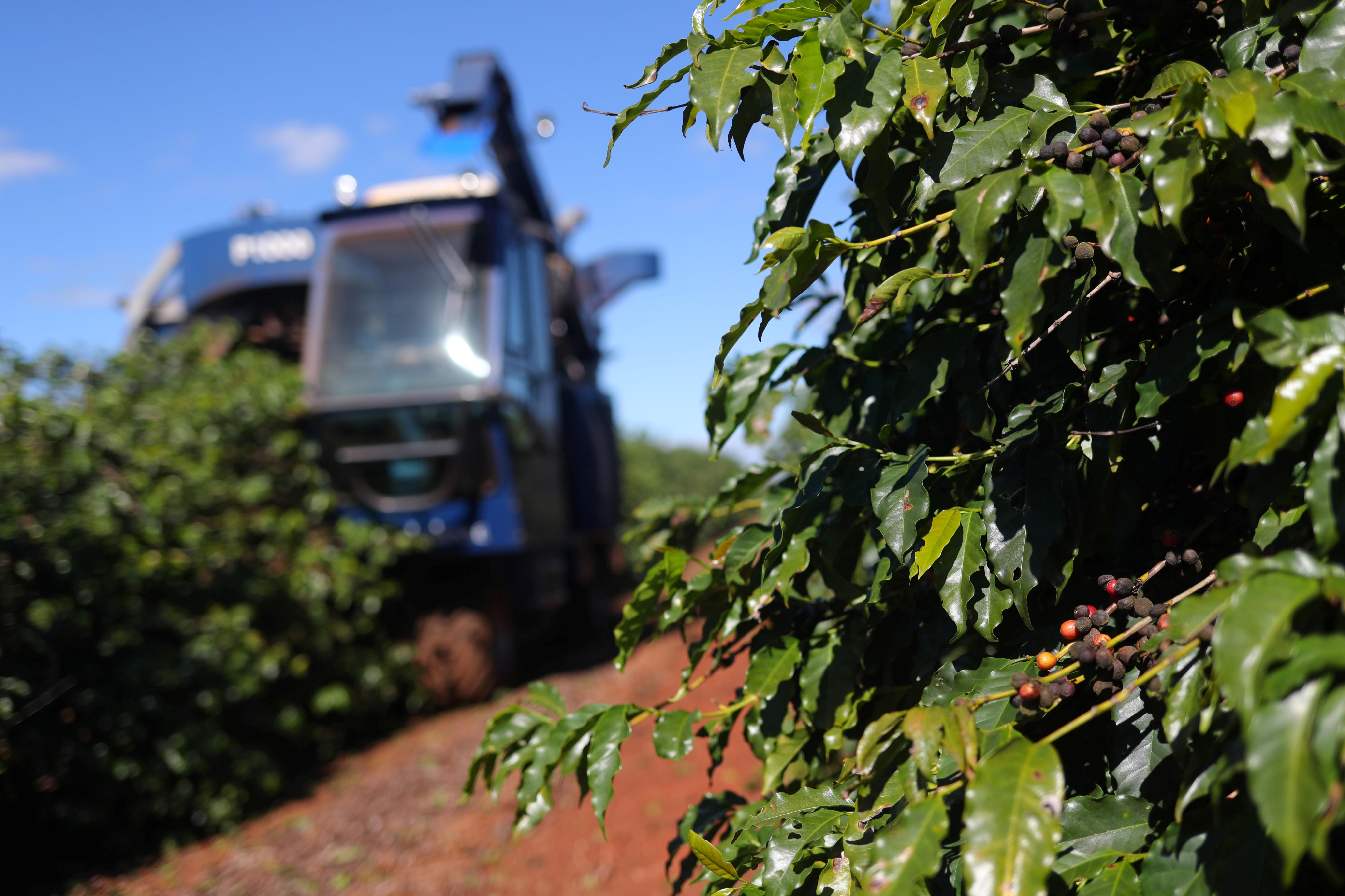 Colheitadeira avança sobre plantação de café em São João da Boa Vista (SP) (Foto: Reuters/Amanda Perobelli)