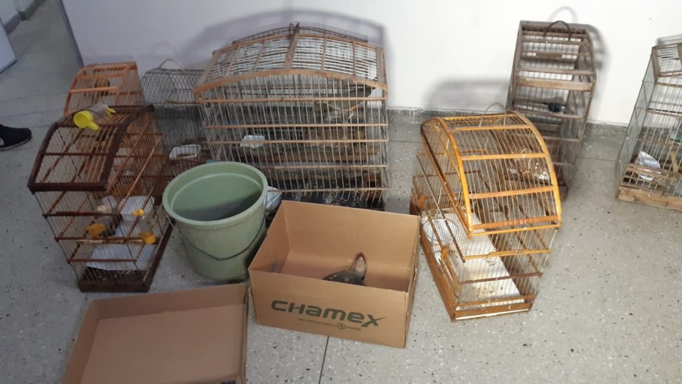 Animais silvestres eram mantidos em cativeiro — Foto: Sérgio Henrique Santos / Intertv Cabugi